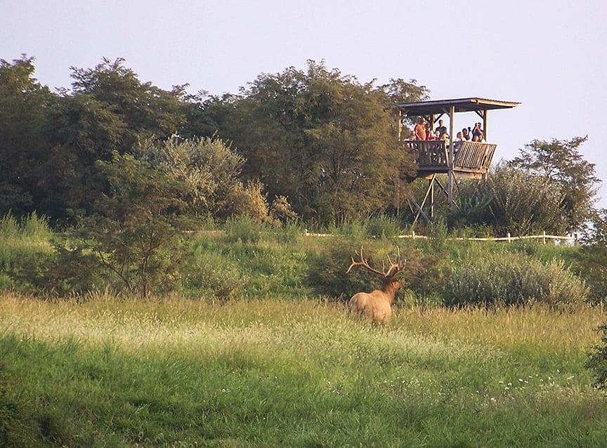 Hatfield Knob Elk Viewing Tower